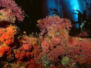 Postal: Vegetación marina