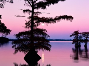 Postal: La luna sobre el lago Reelfoot, Tennessee