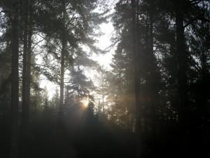 El sol entre los árboles