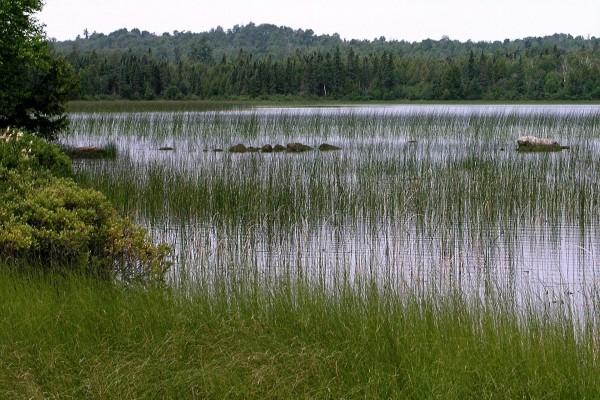 Hierba verde en el agua