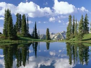 Postal: Pinos y nubes reflejados en el lago