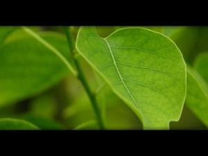 Hoja verde en la planta