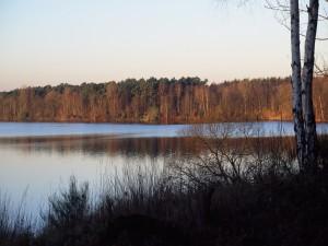 Postal: Arboleda junto al lago