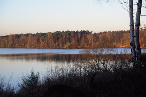 Arboleda junto al lago