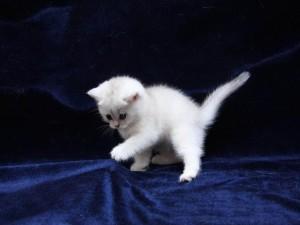 El gatito se enganchó las uñas