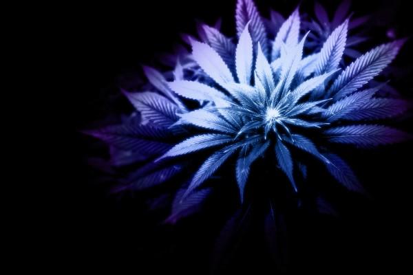 Hojas formando una planta