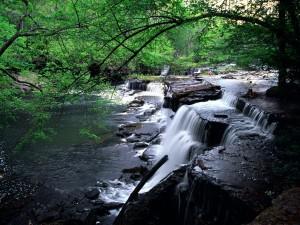 Pequeños saltos de agua en el río
