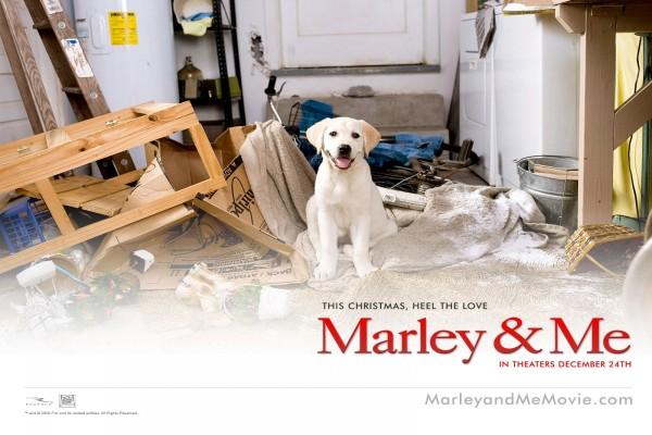 """Perro de """"Marley & Me"""""""