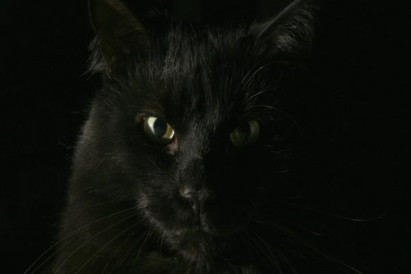 Gato negro en la oscuridad