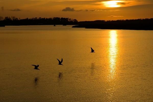 Aves en la superficie del agua