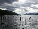 Palos en el lago