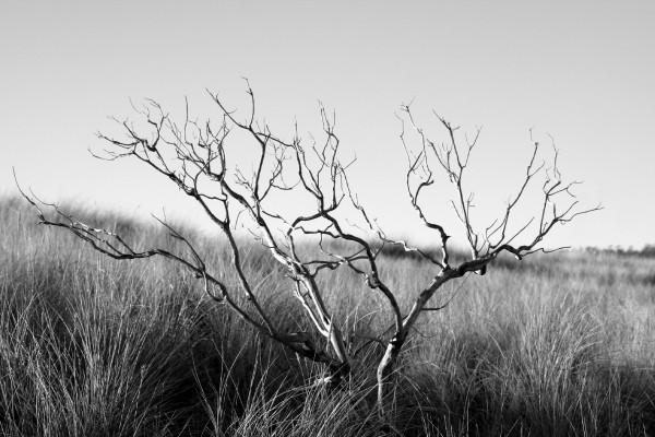 Árbol solitario en blanco y negro