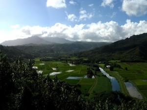 Postal: Campos de cultivo con agua