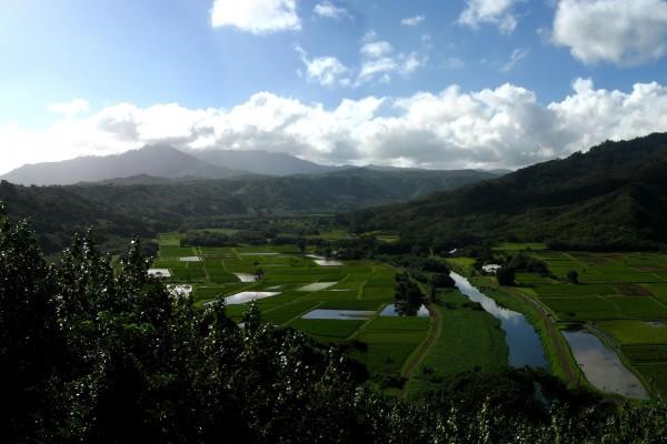 Campos de cultivo con agua