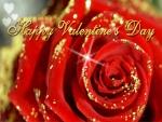 Feliz Día de San Valentín con una rosa