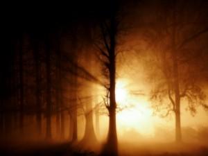 Luminosidad en el bosque