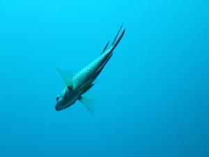 Bonito pez bajo el agua