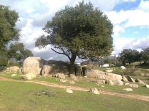 Postal: Un árbol en área verde
