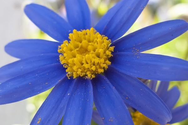 Una preciosa flor de pétalos morados
