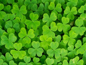 Tréboles verdes