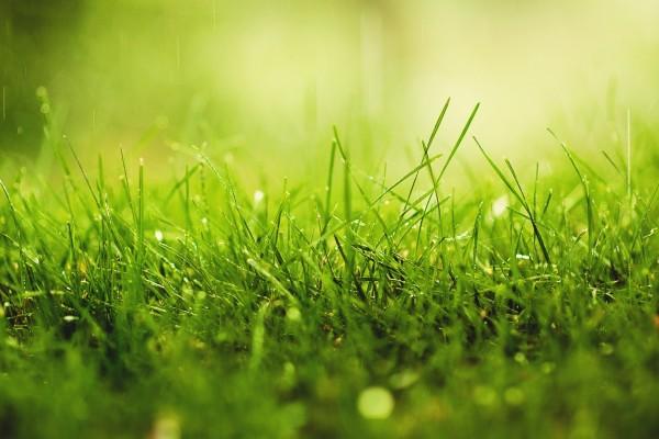 Lluvia sobre hierba verde