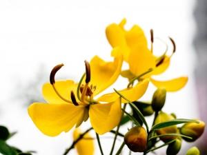 Postal: Delicada flor amarilla