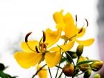 Delicada flor amarilla