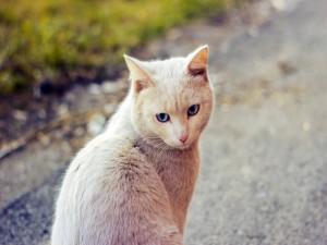 Bonito gato sentado en la carretera