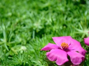 Bonita flor rosa en fondo verde