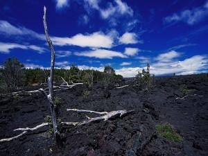 Árboles en la tierra negra