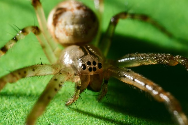 Pequeña araña