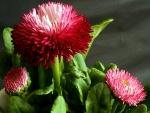 Espectaculares flores rosas