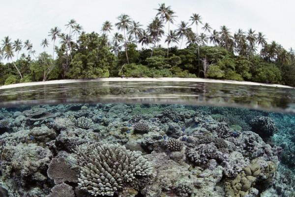 Pequeños peces azules en el arrecife de coral