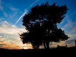 Un árbol en la oscuridad