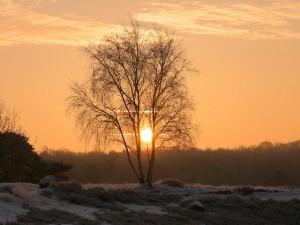 Árbol en invierno