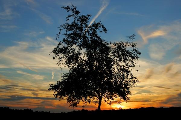 Árbol y cielo al amanecer
