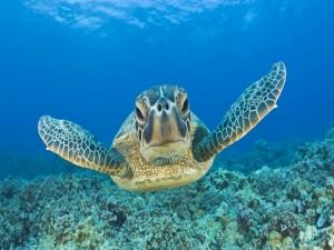 Frente a la tortuga