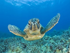Postal: Frente a la tortuga