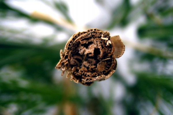 Interior de un palo