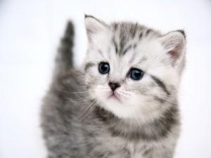Bonita cara de un gatito