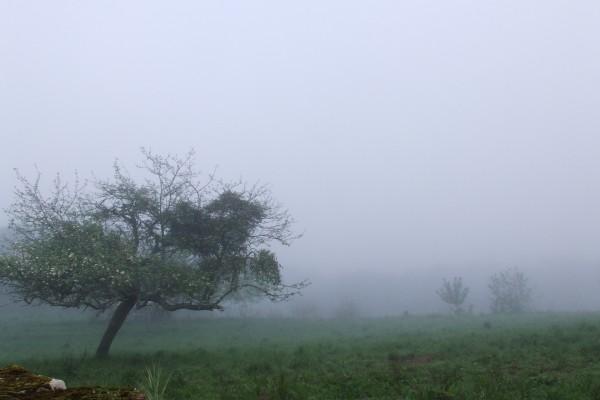 Niebla entre los árboles al amanecer