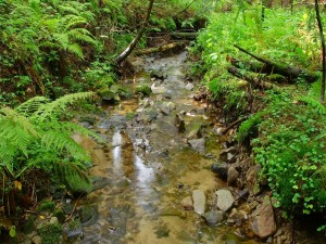 Helechos y piedras en el río