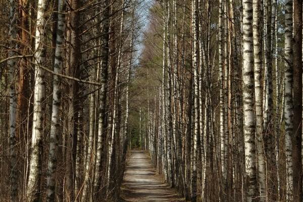 Estrecho camino entre árboles