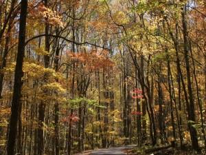 Carretera cubierta de árboles otoñales