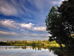 Lago y árboles verdes