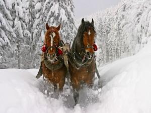 Postal: Caballos en la nieve