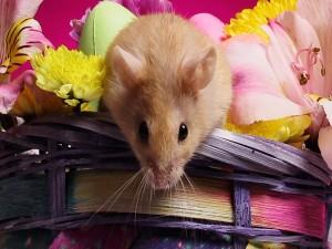 Postal: Ratón en la cesta