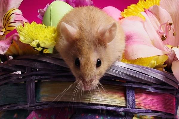Ratón en la cesta