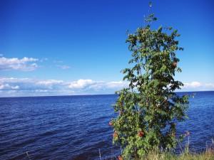 Árbol y el mar azul