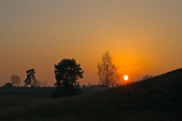 Árboles y el sol de la tarde